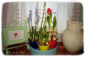 Regentag Frühlingsblumen
