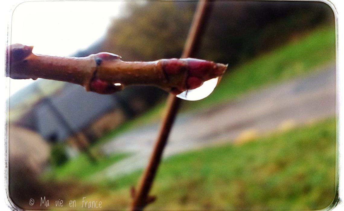 Regentag Tropfen