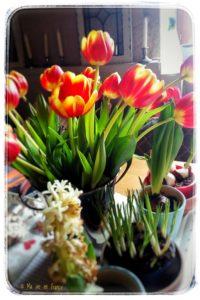 Regentag Tulpen